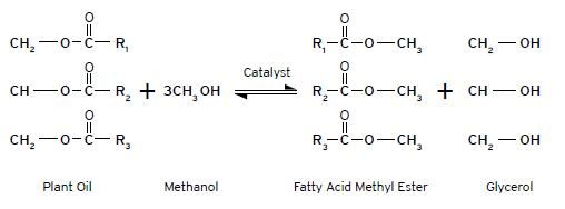 Production of Methyl Ester